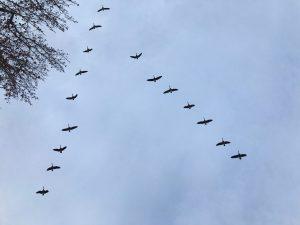 ציפורים – זה קיטש?
