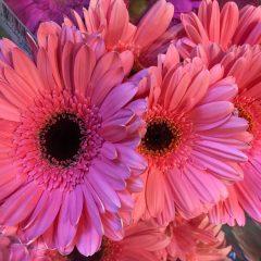 מחשבות על פרחים